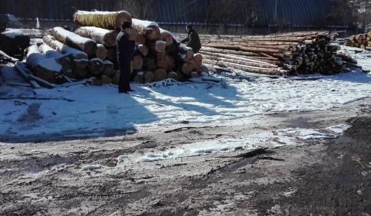 Poliţiştii au confiscat lemn și au dat amenzi, în Bicaz ...